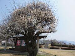 「道の駅 白沢」
