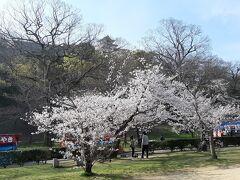幸い、桜の見所はお堀の先の公園でした。 なんの問題もありませんw