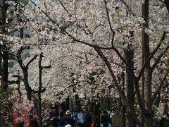 見事な咲きっぷり。ただ人も多いので、サッと歩きながら。