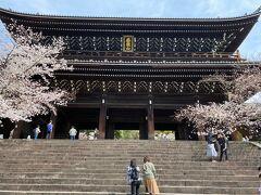 知恩院、三門  昨年の秋にもおじゃましました。 荘厳な三門も 桜が咲いていると華やいだ雰囲気。