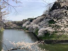 来年は「さくらまつり」が開催されて、以前のように夜桜のライトアップが見れるといいですね。