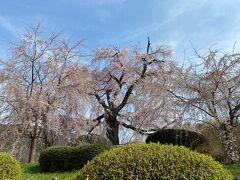 円山公園に移動しました。 徒歩ですぐです。