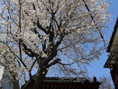 海福寺参道の桜も満開