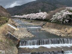 しかも満開に当たるとは~嬉しい誤算(((o(*゚▽゚*)o)))♡ ただ青空じゃないのが残念だけど雨も降らずに耐えてくれてる、、、 こんな空でも桜の美しさが感じられる桜並木(≧◇≦)
