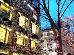続いて「コレド室町」前の桜☆  こんな感じで桜が続いています。