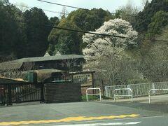 我が家の墓地に向かいます。 武蔵陵墓地に隣接する多摩森林科学園。ここも花見の名所ですが、現在閉園中。4月2日に開園されるようです。