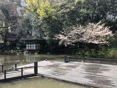 浮月楼庭園  昨夜の雨で池板が濡れている