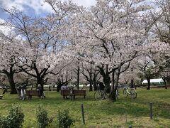 駿府城公園 桜も満開