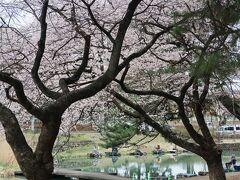 daily~日常の風景  桜の岸で舟を漕ぐ のどけき釣り人 夢心地