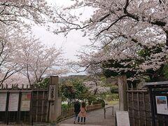 三溪園の入口に到着。満開の桜が出迎えてくれているようです。