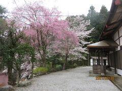 門前のしだれ桜が有名な昌福寺にやってきました。山あいのお寺に向かう道は細く分かりにくく、駐車場も2台程しかスペースがありません。