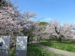 大濠公園へ、桜を見にやってきました。