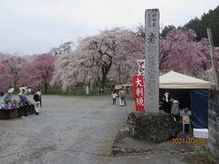 昌福寺から車で数分、秩父ではしだれ桜で一番有名な清雲寺にやってきました。