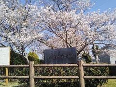 次に訪れたのは薩摩国分寺跡。現在は薩摩国分寺跡史跡公園として整備されている。 入口の桜は満開を過ぎてわずかに葉が出ている。