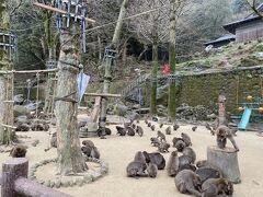ここもよく訪れる大好きなスポット。 高崎山自然動物園 赤ちゃん、本当に可愛い