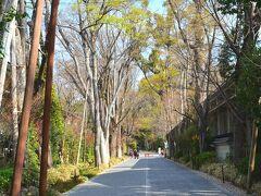 糺の森 https://tadasunomori.or.jp/  こんな街の中に広がる糺の森は、世界遺産・下鴨神社を含む、縄文時代から生き続ける広さ3万6千坪の森。 ここは秋も美しいと思うんだけど、前回はここまで来なかったな。