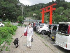 9月15日~16日 自宅から1時間半位で行ける箱根へ。 やはり箱根、湯河原は近いです! いつものように、黒ラブのオーキッドを連れての1泊旅です。