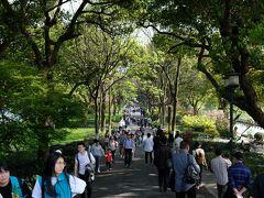 蘇堤は木々に囲まれた小さな遊歩道 少しだけ歩き引き返します。