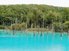 【青い池】  青空の下だったら、もっと鮮やかな青色に見えるんでしょうね(T_T)  この前年にも行ったから、その時に撮った写真と比べてみたけど、結局は似たようなものでしたw この時期に快晴になる確率が高くないのかも…  一応、何枚か貼ります(^^)
