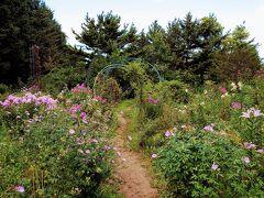 【紫竹ガーデン(多分)】  最後に訪れたガーデン街道シリーズがここ紫竹ガーデンで、最初の上野ファームから数えて6ヶ所目です(^^) 北海道の観光ガーデン散策は初体験でしたが、総じて楽しかったです(^^)   実はここの前に【六花の森】にも行ったけど、スマホで1枚も写真を撮ってなかったようですw 理由は……………よく旅行雑誌に掲載されている、黄色い花が川の両岸を埋め尽くしている見事な風景をイメージして、それを楽しみにして行ったのに、黄色が全く見つけられずにテンション大幅ダウンしたから(T_T) 変だな?と思い、現場ですぐにググって調べたけど、黄色の正体はエゾノリュウキンカという花らしく、全くの季節外れだったようですw草w
