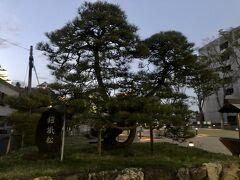鎧掛松は、浜松城公園の西側の一番端っこに、あります。
