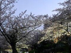 浜松城公園のさくらは「散り始め」でした。でもこの時期は、風が吹くたびに花吹雪が盛んに舞います。