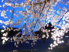4月1日 東寺さんのライトアップに