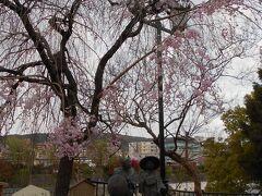 4月2日 東海道 京のはじまり三条大橋