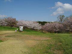 杉山城跡 桜がまだ咲いていました。