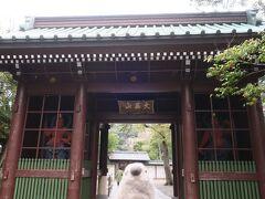鎌倉といえば大仏。 ゴエモンは大仏初体験。  ゴエモン「わくわく」