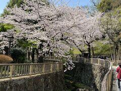 飛鳥山公園の前に同じく王子駅前にある音無親水公園へ。 こちらも見事に桜が咲いています。
