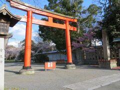 まだまだ桜が見たいと、平野神社にやってきました。