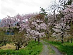 駅方面に戻ります。 参道途中のレストラン「有隣倶楽部」の脇にあった標識が分かり辛く、右折すれば「通り抜けの桜」だと思って辿り着いたのは、 07:35 実は桜の里「野土山」だったようです。