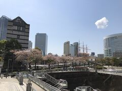 桜木町駅から散策を始めました。 横浜ランドマークタワー前のさくら通り。ソメイヨシノは、だいぶ散ってしまっていました。