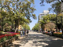 横浜公園からのびる、日本大通り。