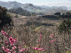 昔から梅の産地だったこの地域が梅干し作りに力を入れ始めたきっかけは、日清戦争。梅干しは兵士の食料として戦場ではなくてはならない食べ物だったのだ。
