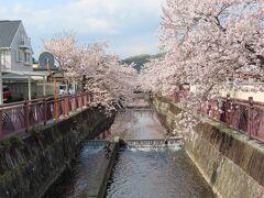 【八瀬川「さくらプロムナード」 太田 2021/04/02】  車で走行中、桜並木が見えたので、立ち寄ってみました。八瀬川にと言う川の両側に満開の桜並木になっており、提灯が吊るされていました。横浜の大岡川を小さくした感じで、200m位続いていました。 所在地: 〒373-0057 群馬県太田市本町36-1 営業時間: 24 時間営業 電話: 0276-22-1448