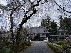 中町を歩いて天神町との境にある筋違いの交差点まで行き、そこから南へと歩くと、関川寺の参道へと入って行く。 この寺は、白河結城氏所縁の寺であり、境内には、結城桜と名付けられた枝垂桜があった。