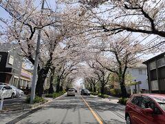 でも道の両側はず~っと桜並木が連なる。今は落下盛んという時期か。 そしてここつくし野桜並木は、、もう35年前のかの不倫ドラマの先駆け「金曜日の妻たちへ」の舞台なのだ。覚えてます? 古谷一宏といしだあゆみ、小川知子。主題歌は小林明子「恋の落ちて」。  https://youtu.be/hROrzSGHzp4 こんな感じのオープニングでしたよね。実際にはこの道からつくし野駅の方に折れた道だったらしい。