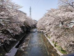 さあ、恩田川に到着。 今年も見事に咲いてくれています。