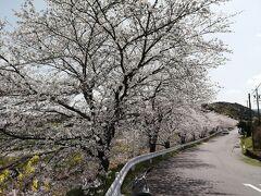 桜並木の北の端。 さぁ、花見をしますか。