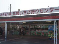 今の時期の静岡と言えばいちご狩りです。 今年はにっくきコロナの影響で、休業しているお店が多く、ここ、江間いちご狩りセンターにたどり着きました。