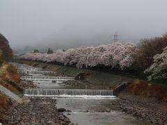 今日は『箱根神社』と『九頭龍神社』には行きたいので朝一で朝食を頂こうと早起き。 朝食は7時半からで時間が少しあったので、また桜を見に早川堤の桜見学、もっやもやだけど