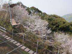 松山城まではロープウェイとリフトの二択。 当然リフトをチョイス。  リフトに乗るとスキーを滑ってた頃を思い出す。 スキー板をはいてた足の感覚が不思議とよみがえります。 愛用のKAZAMAのスキー板はずいぶん前に処分したなぁなんて思い出しましたよ。  リフトからは植生があるので眺望はないですが桜は綺麗に咲いていました。