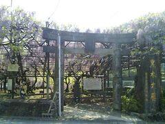 酒蔵の見学と買物を終えて、いよいよ大藤です。素戔嗚神社が会場です。