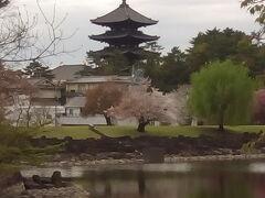 奈良公園の方に下って歩くと左手に興福寺の五重塔が見えてきました。荒池の映り込みは揺らいで残念。