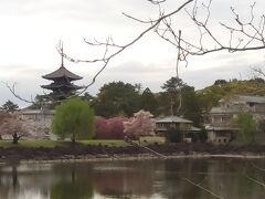 ピンクの濃いのも桜かな?緑も加わり、良い景色です。青空ならもっと絵になるでしょうね。