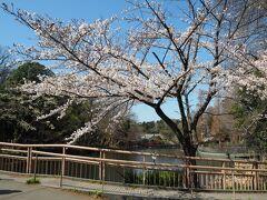 2021年3月25日 お花見で有名な公園でもある井の頭公園にやってきました。