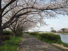 こちらにも湖沿いに少し桜並木がありましたが、主に広い芝生広場と遊具があり、こちらはお子様連れにぴったりの公園でした。