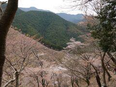 7~8分登ったら、桜と谷が見えて来ましたね。